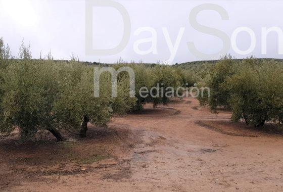 TIERRA DE OLIVAR CON NAVE, LUZ Y AGUA
